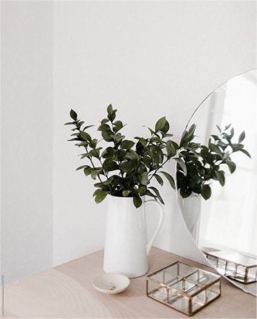 A plant and mirror in a white room